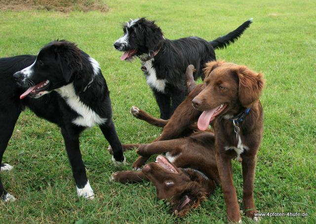 Higgins, Maja, Cate und Amos